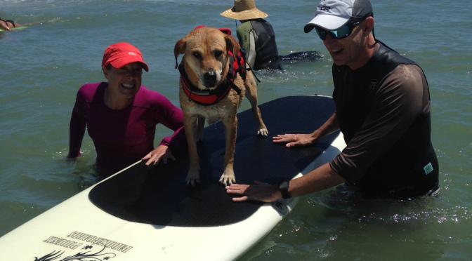 Katie Lou Surf Dog Flagler Beach